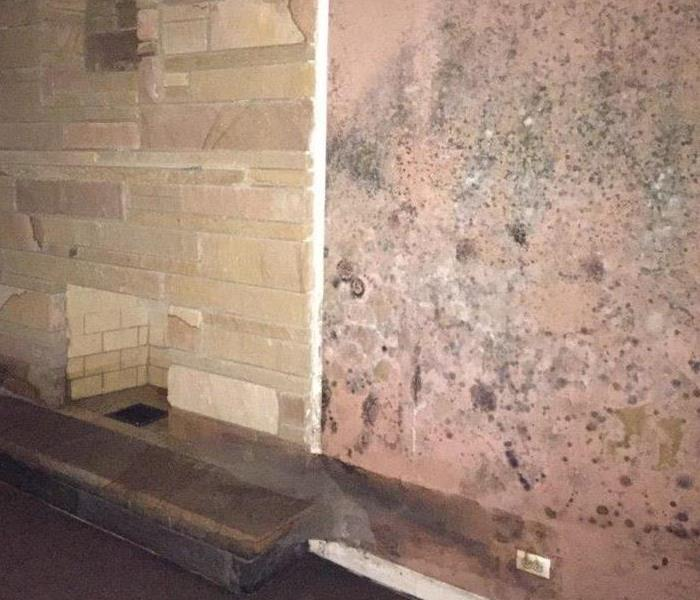 Mold Remediation Mold Remediation and Removal